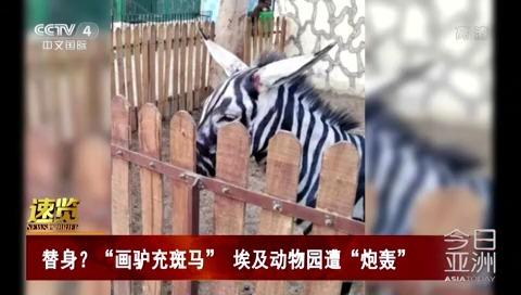 """""""画驴充斑马"""" 埃及动物园遭""""炮轰"""" 】近日,埃及的一家动物园上."""
