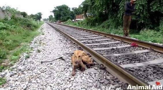 一只奄奄一息的狗被丢弃在冰冷的火车道上 路人的做法出人意料