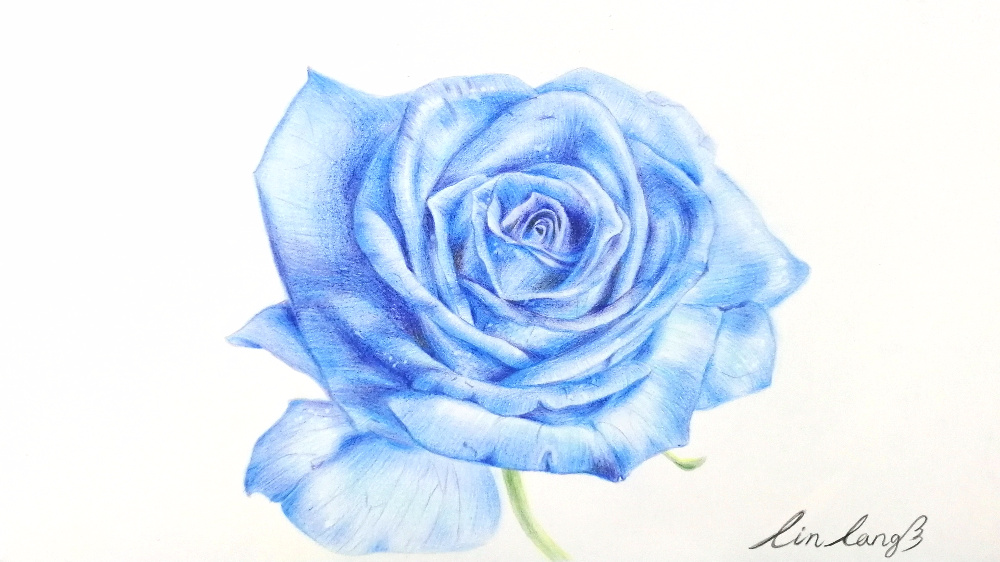 【手绘教程.12】彩铅粉色玫瑰|花瓣|花杆|纹路_新浪网
