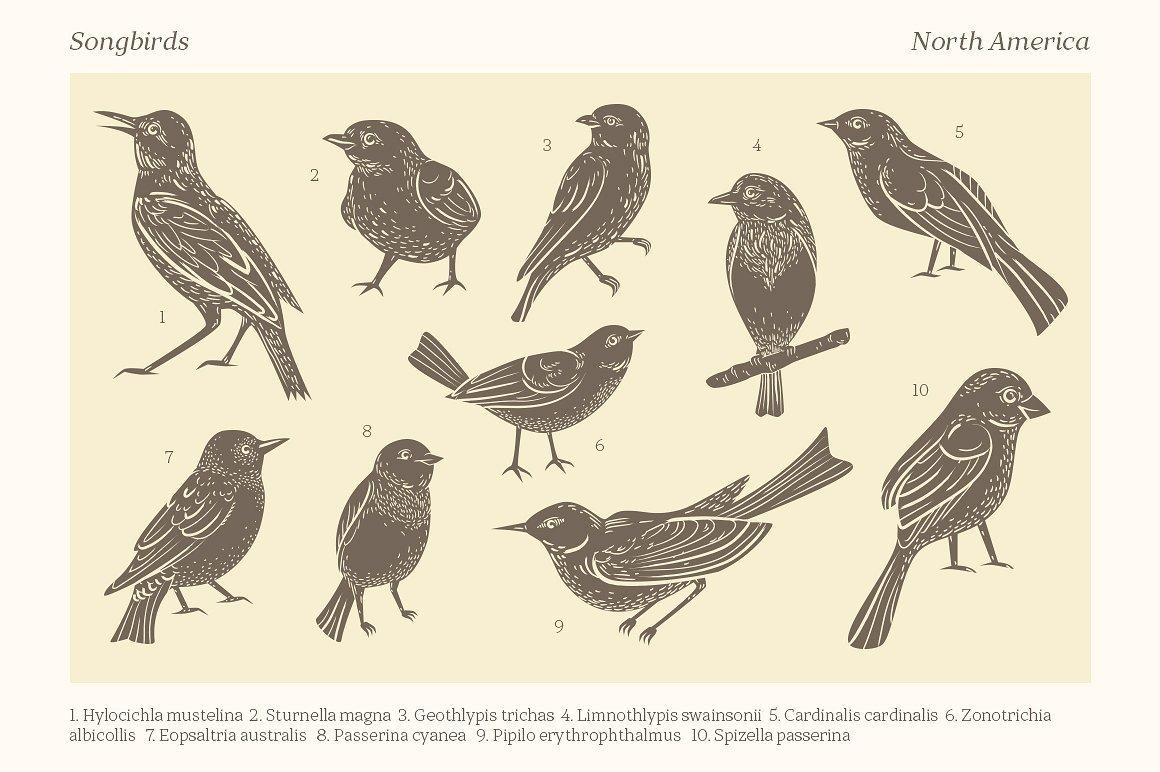 燕窝文艺复古高端手绘线条小鸟花环png ai 包装设计素材 更多详情 >