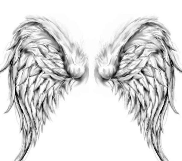 手绘翅膀图片手绘简易
