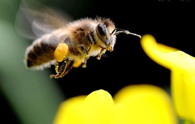 蜜蜂蜂蜜 皆为药来图片
