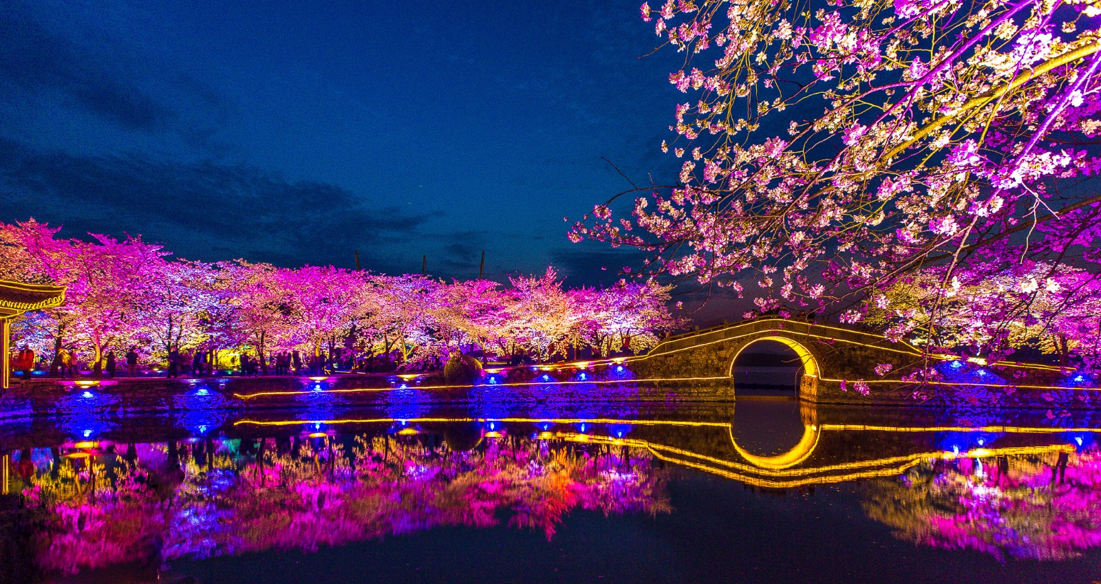 鼋头渚赏樱的时间 无锡太湖鼋头渚种植樱花的历史比较悠长,早在上世纪的三十年代,当时鼋头渚的园主杨翰西,曾撰写过《鼋渚艺植录》一书,对自己园内樱花的习性、栽培技术及观赏特性进行详细记载。现在鼋头渚最具视觉冲击力的长春桥两旁的樱花堤,就是当年杨翰西记载的著名的景点之一,长春花漪的名字也来源于它。现园内充山的山脚下,仍保留着当初杨翰西种植的樱花数株,其中胸径最大的一株达46公分,被称为樱花树王。