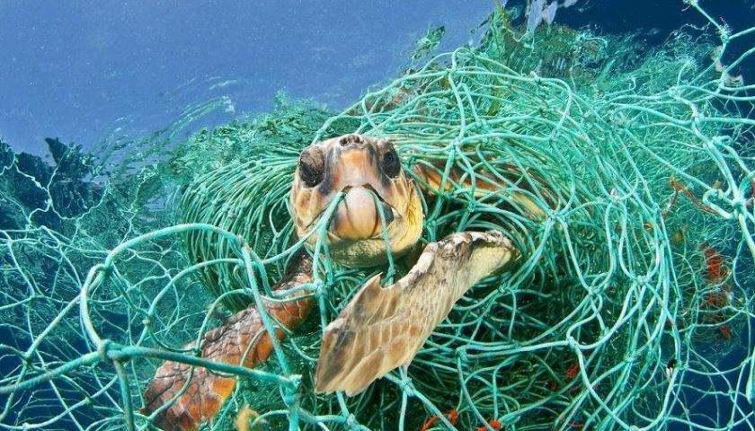 世界第一大垃圾岛,臭气熏天马上就要建国 海洋污染日益严重