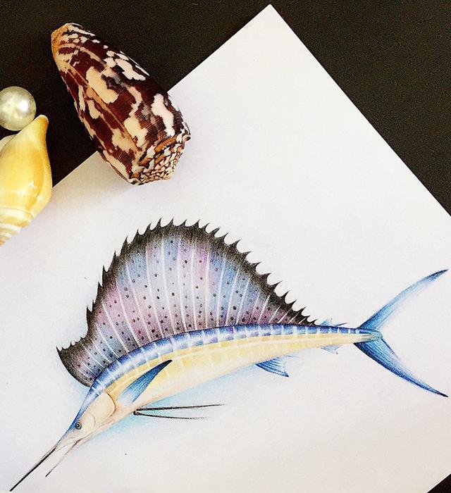 海明威《老人与海》中的旗鱼长什么样子的?彩铅手绘