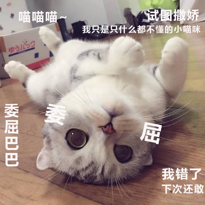 无水印喵星人表情包,我只是只什么都不懂的小猫咪啊图片
