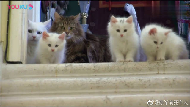 猫妈妈教小奶猫下楼梯,这小奶步太萌了,好想养一只啊