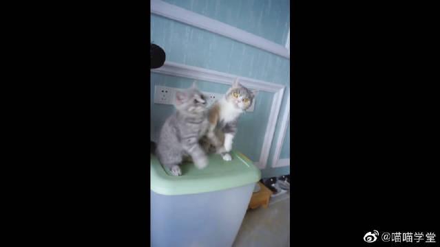 这哪像母女,明明就是三只小奶猫!