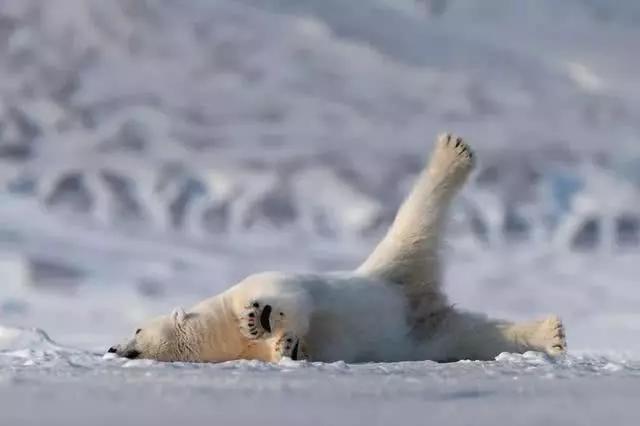 蟒蛇5分钟,出汗2就是,北极熊这瑜伽啊,一看小时体寒加体虚.抓体质图片