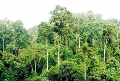 世界之最的六种树木,最贵、最毒、最硬的都在中国