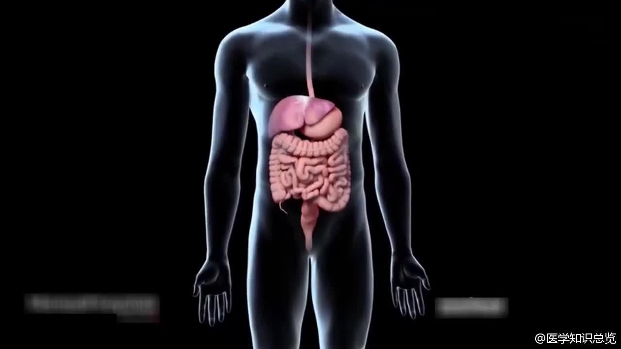 3D动画演示病毒侵入体内导致肝硬化全过程,看完瑟瑟发抖中..
