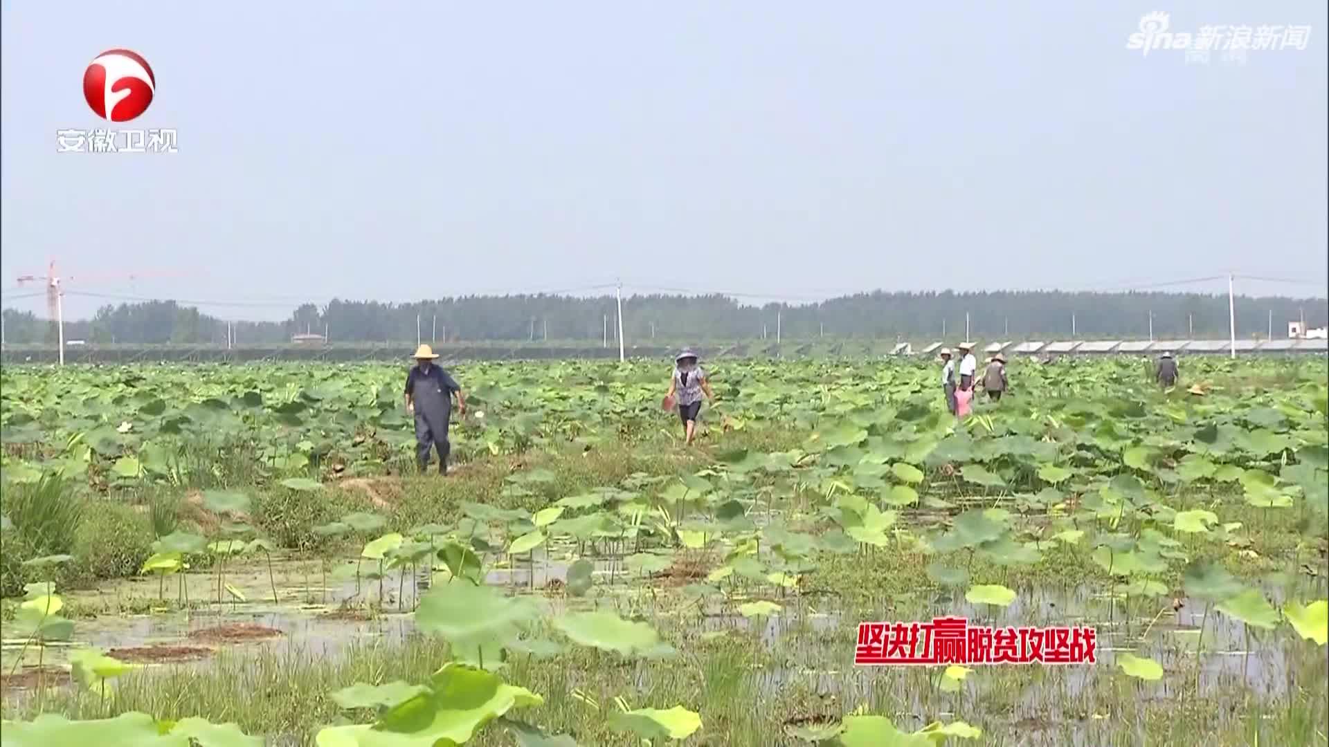 《新安夜空》安徽:特色农业产业增添脱贫新动能