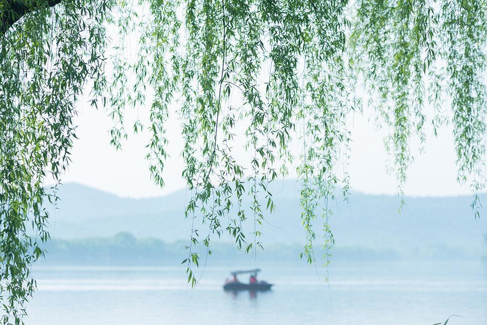 宛转若游丝,浅深栽绿崦。年年立春后,即被啼莺占
