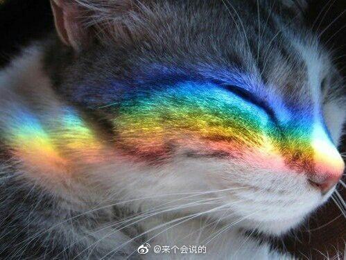 点赞彩虹猫,3天内好运连连!