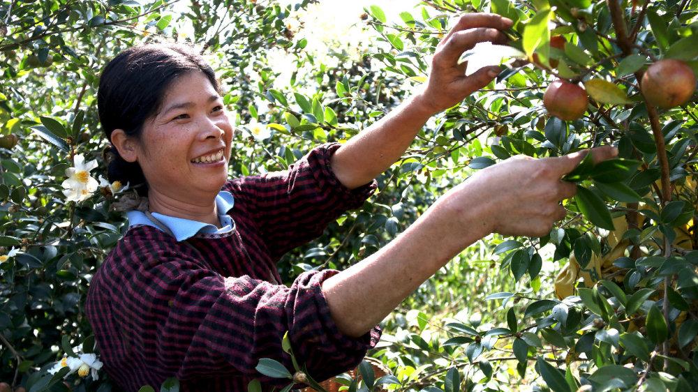 贵州发展油茶产业前景广目前已有26个油茶品牌
