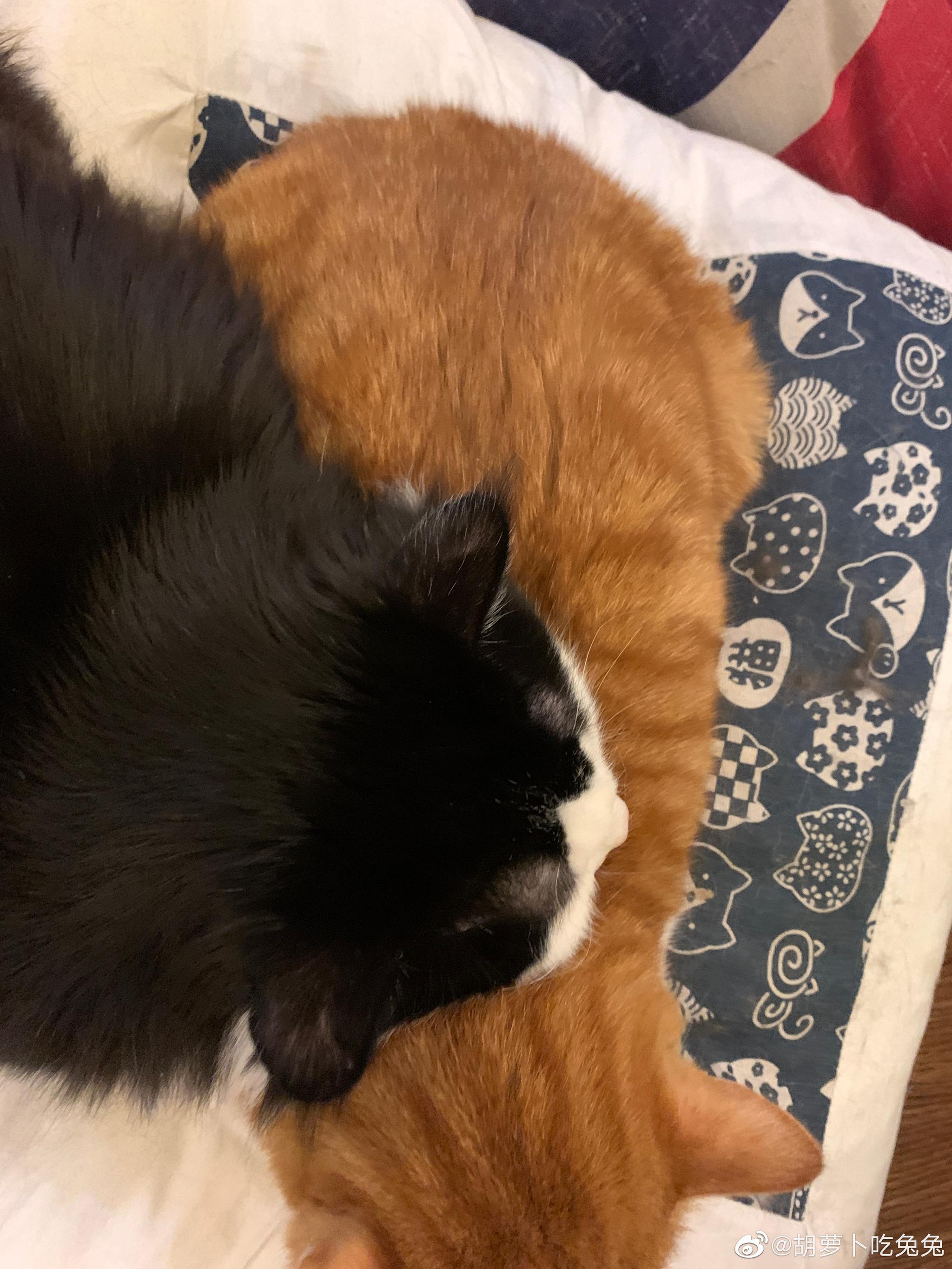 哥哥的猪枕头万里挑一的舒服