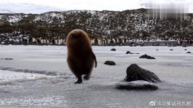 """行走的""""猕猴桃"""",企鹅宝宝一脚踩进冰窟窿"""