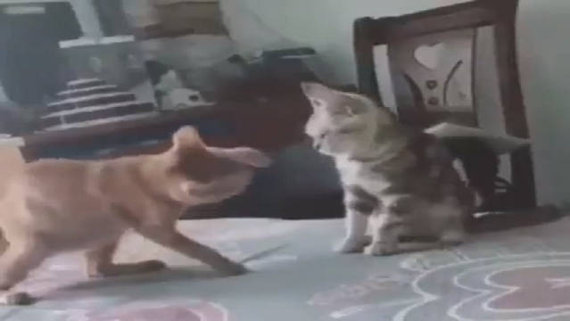 打架犯规的猫咪们,怎么不按套路出招呢?