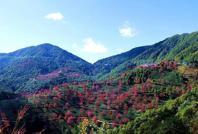 「秘境滇西」探古村看无量樱花·腾冲银杏双飞8天落地自驾之旅
