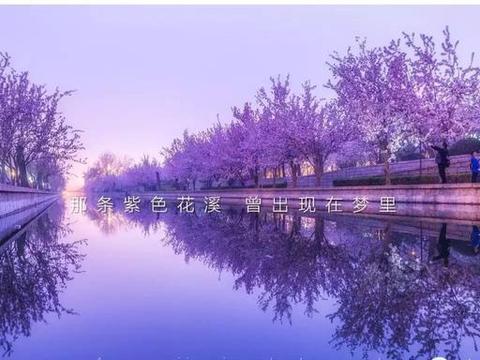 北京城最大的海棠林进入盛花期,夜景不输日本目黑川樱花