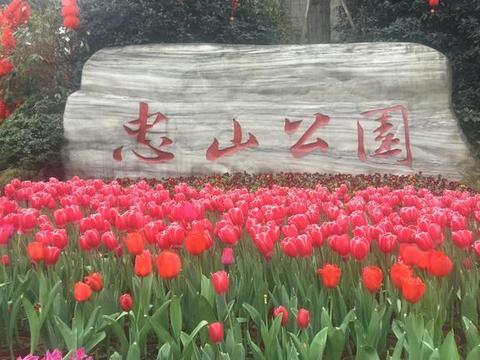 泸州春节年味浓,最美还在忠山公园的郁金香和花红酒绿摄影展