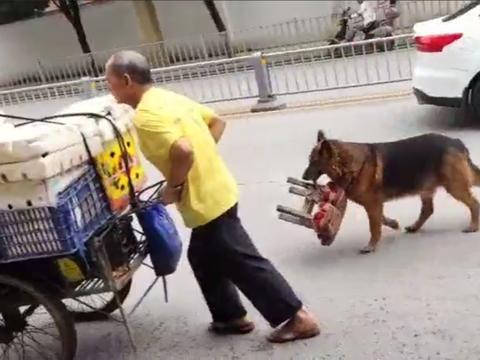 摆摊老人收养昆明犬,十年来不离不弃,给十万块都不卖……