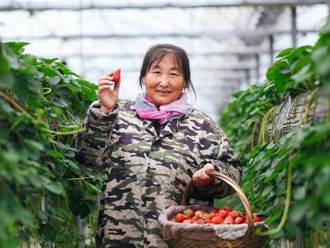 """阿里巴巴亲自""""下田"""":只为消费者找回童年的草莓味儿"""