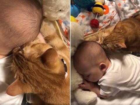 猫咪趁小主人睡觉,狂吸他的后脑勺:这味道怎么那么熟悉?