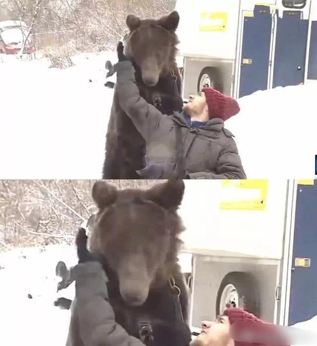 震惊!俄罗斯一男子意外摔断腿后竟雇佣一棕熊每天为其推轮椅...