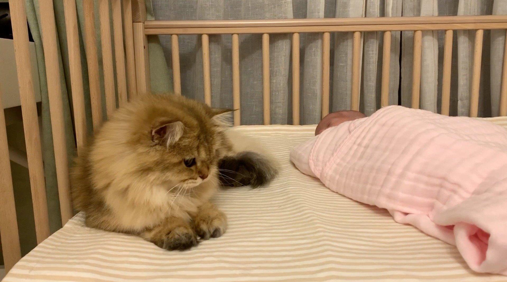 麻糬:这张婴儿床,应该有我一席之地