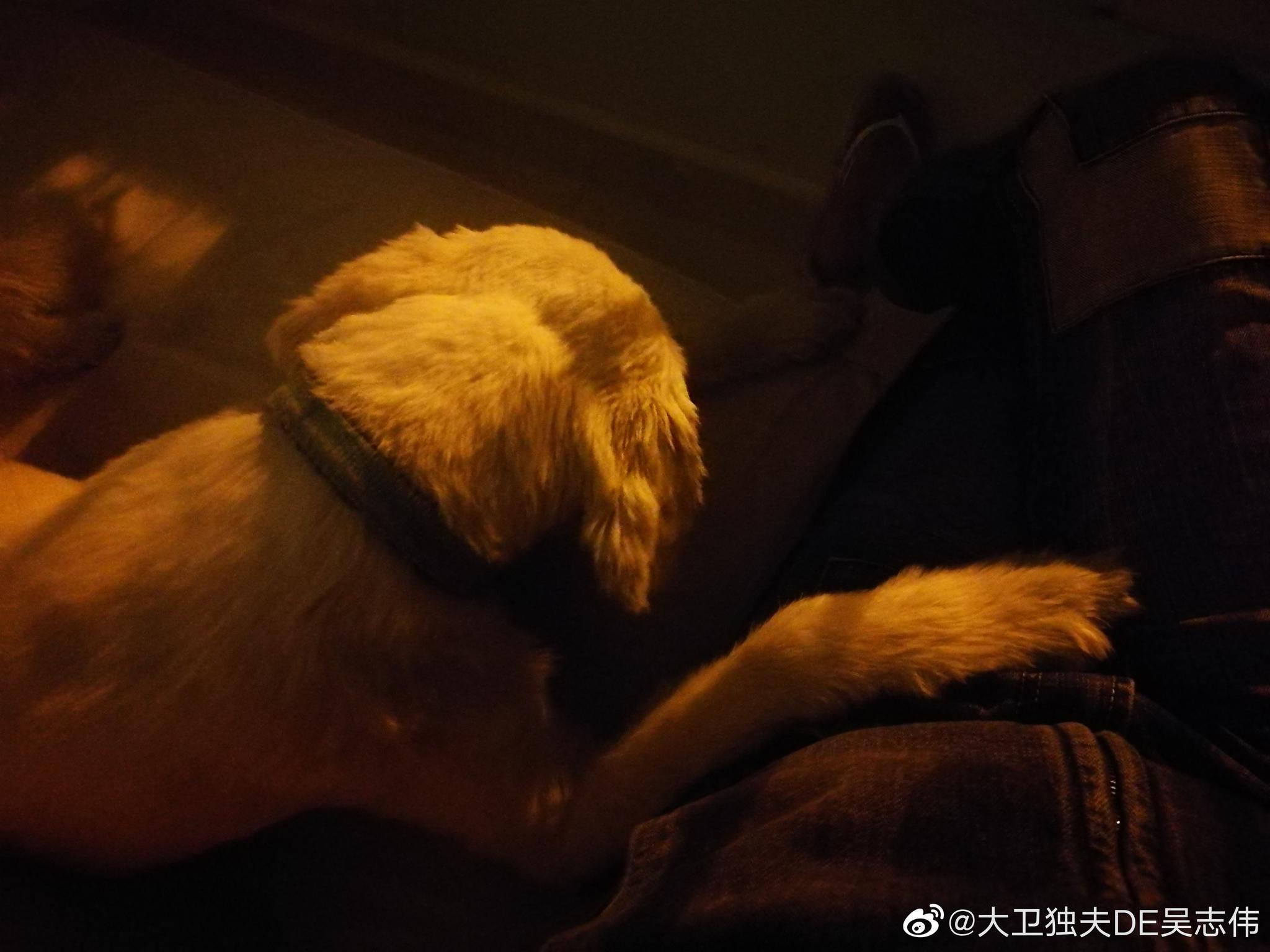 伊兹密尔:包租婆Sonat 家的两只狗太有教养了!我回来