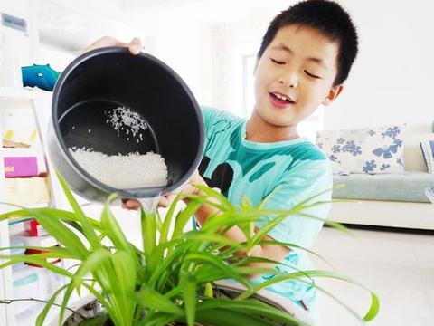 【生活妙招】淘米水在生活中有什么用处?阿蛮教您小妙招