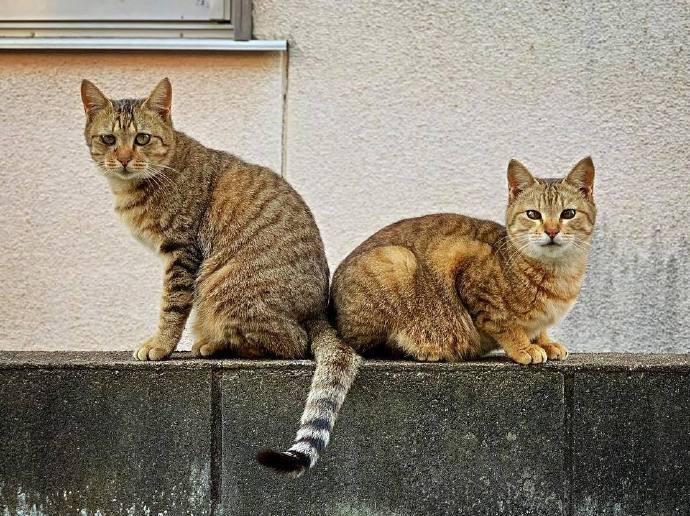 兄弟同穿一条裤子已经不稀奇,连尾巴都能共用才是真兄弟....