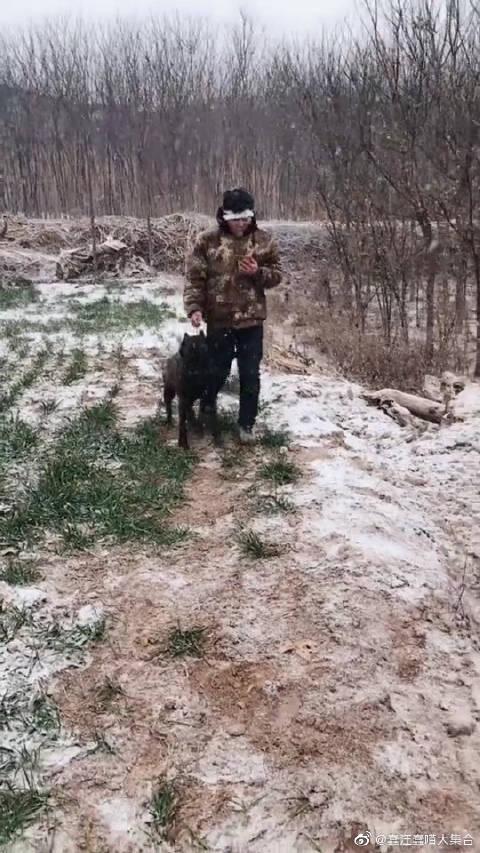 主人在野外遇到危险,狗狗的举动让人感动!这狗狗好聪明啊!