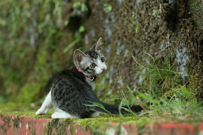 网友带家里的猫咪出去踏青,拍下每一张照片都萌到心坎里了!