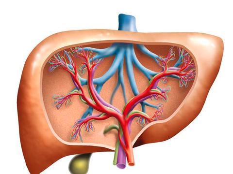 B型肝、C型肝是肝病主因!定期检查、治疗可降低65%肝癌发生率!