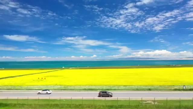 青海湖畔,油菜花开。