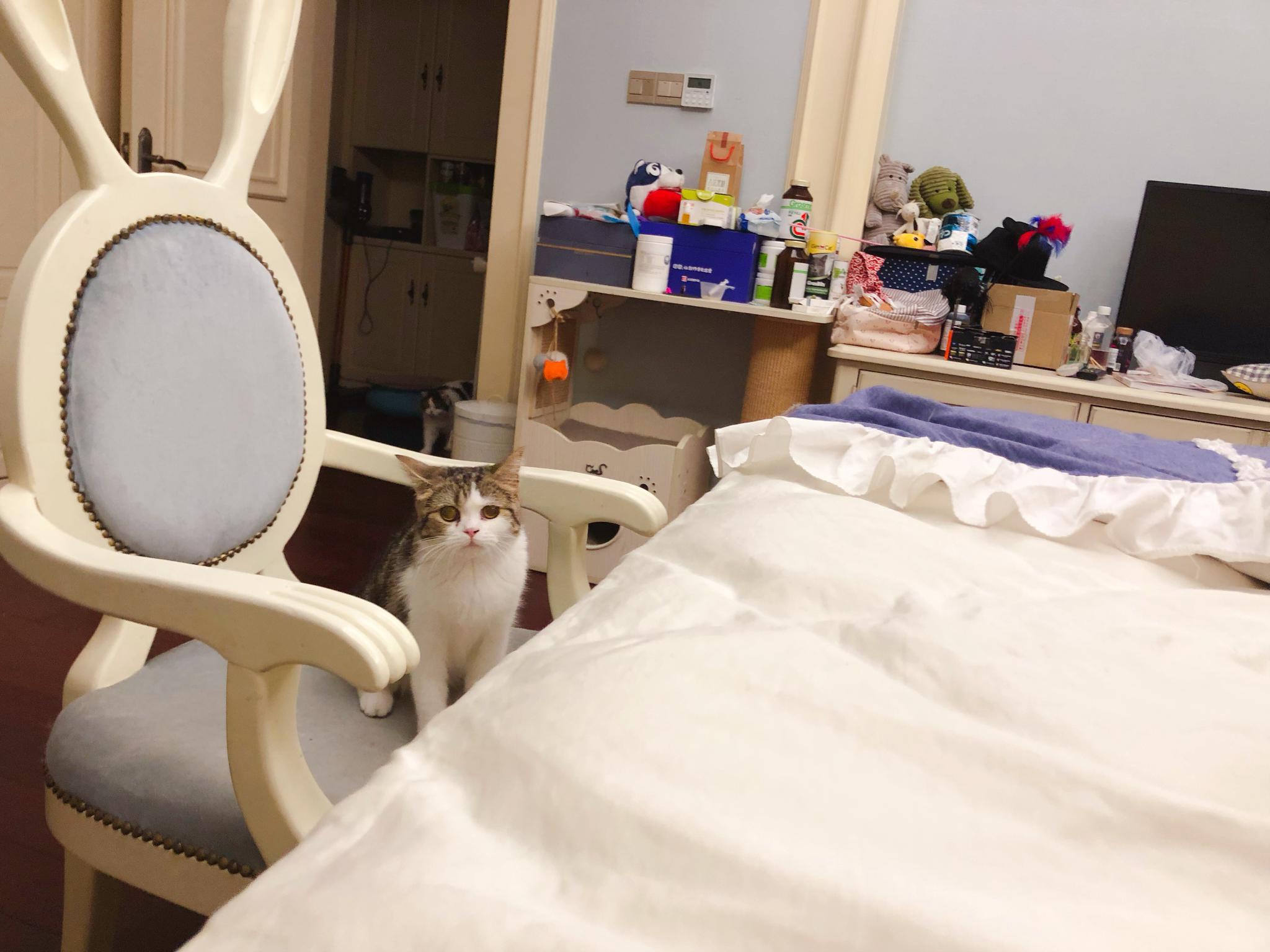 跟帅哥美女@花花与三猫CatLive @喵来啦 @蒂姆嘟嘟Tim @香香软软的小