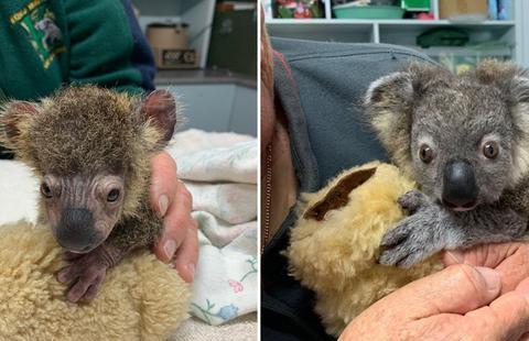 澳政府要求对动物宝宝安乐死,救援人员愤怒:救了命却让我们害命