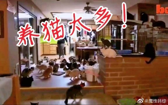 Lisa因为养太多小猫,家里变成这样?据说又新养了两只小猫哦