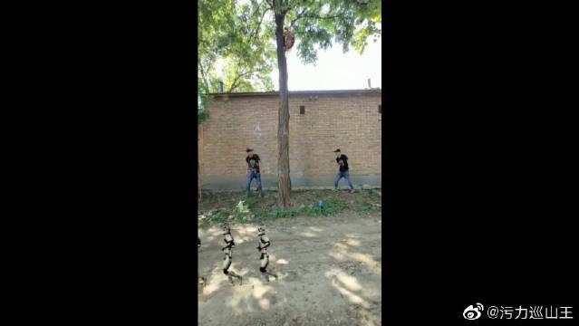 想学乌龟爬树,结果被弹回来了,这两位小哥哥真有趣