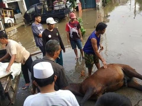 印尼洪灾严重致数万人流离失所,救灾马匹活活累死,倒地在街头