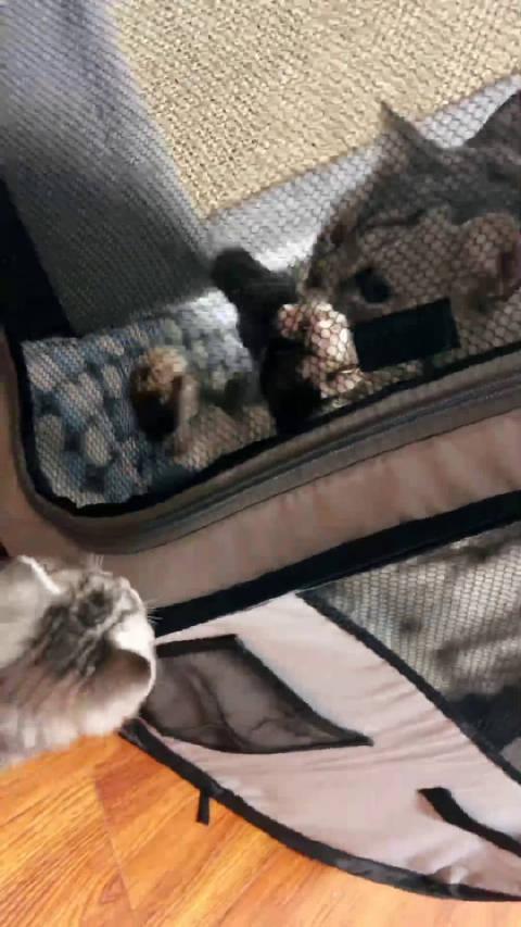 断奶的第一天猪young陪幼恩 我带孩子刚哄睡着