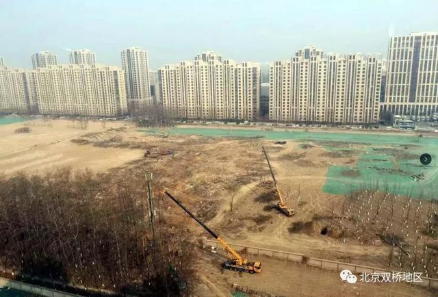 开始树木伐移 北京朝阳医院东院区正式开工在即