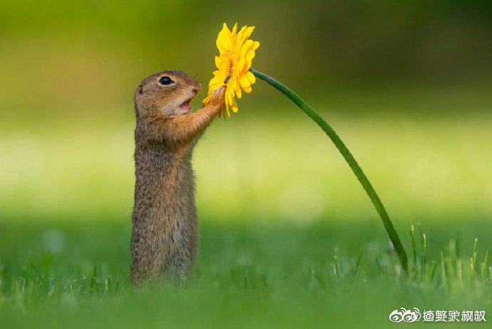 当一只小松鼠遇见了一朵小黄花。