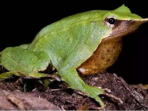 地球上最独特的两栖动物,几千个种类让它们成为最丰富的物种之一