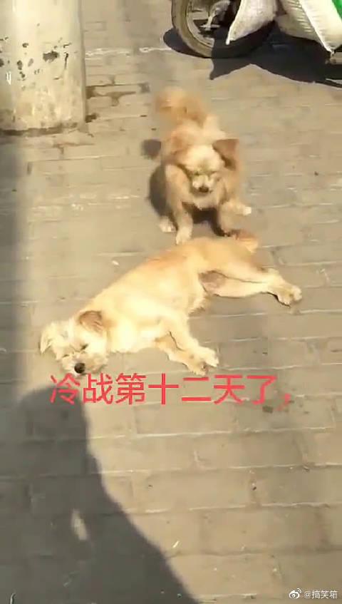 狗子这次错误估计犯的有点大,无法原谅!