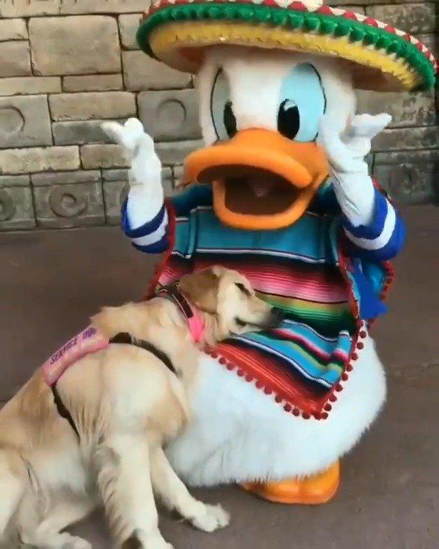 娜拉,一条自闭症服务犬在迪斯尼被她最爱的偶像拥在怀里(IG