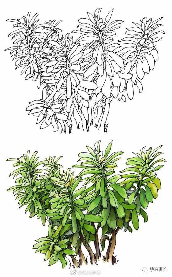 手绘景观植物的画法临摹稿子,好素材!(图源网络,侵删)