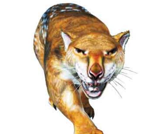 咬合力最强的哺乳动物,狮子对它来说不堪一击!